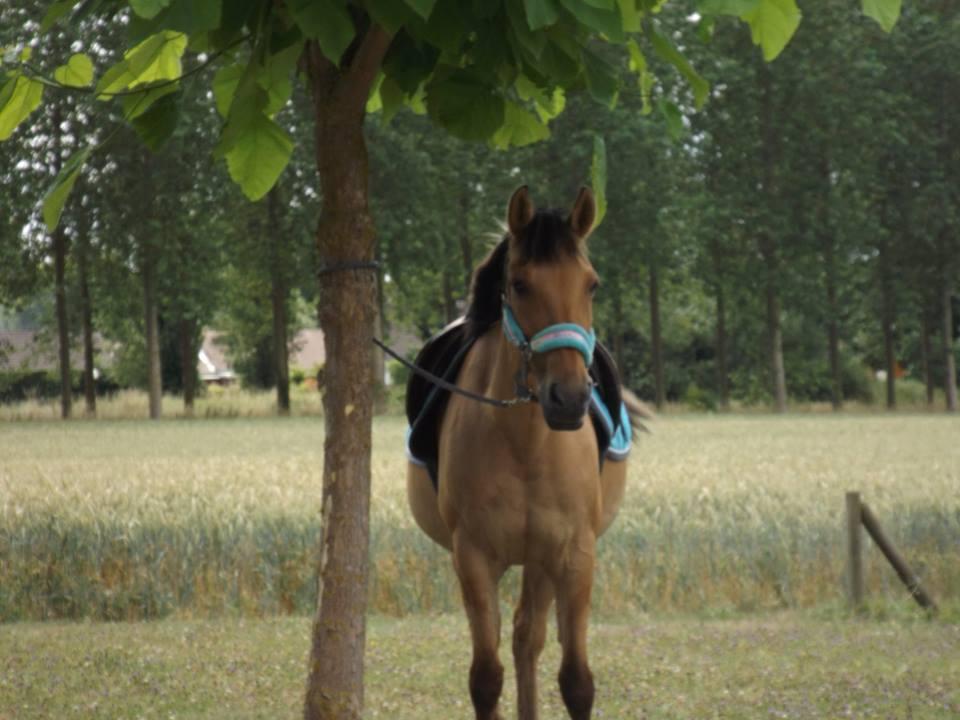 Nos chevaux et poneys de club
