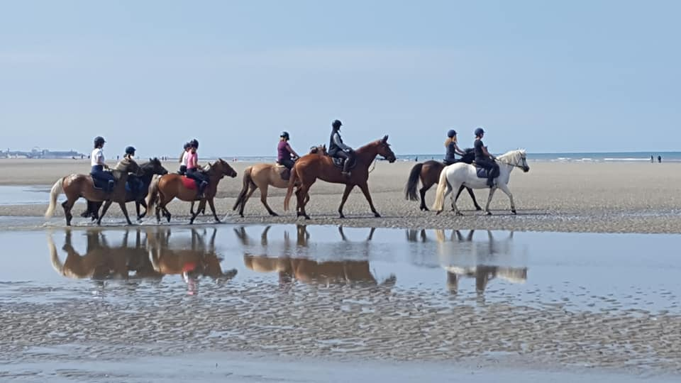 Nos supers poneys à la découverte de la plage !